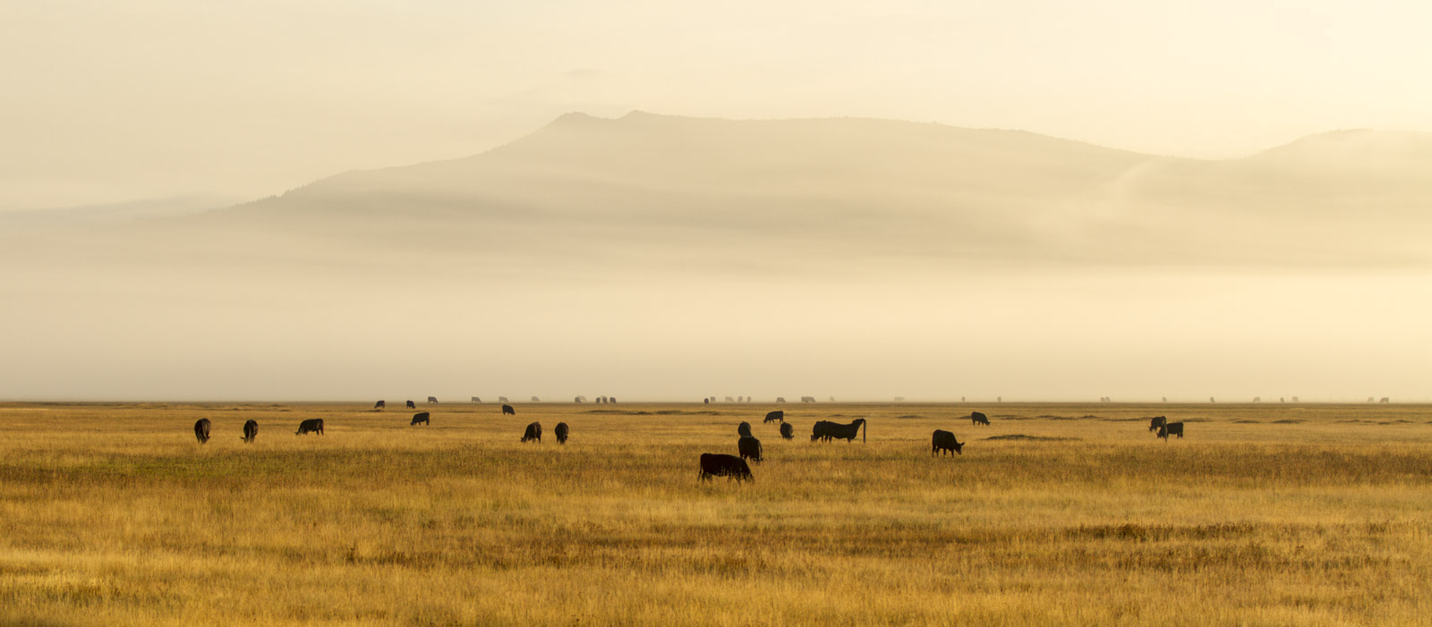 Early morning in Montana, US